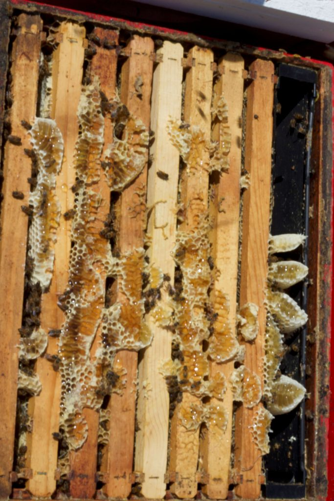 Colony with a lot of honey!
