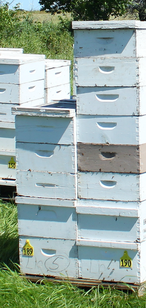 Provide honey bee colonies with space!